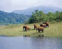 THEKKADY TO ALLEPPEY LEISURE AMID NATURE