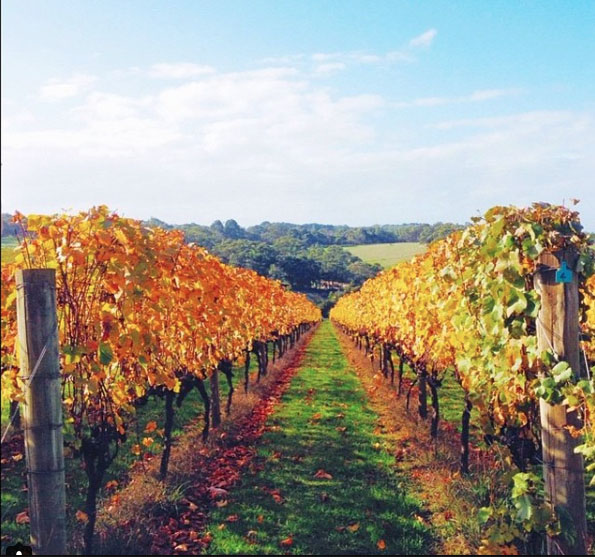 Ultimate Winery Experience in Australia