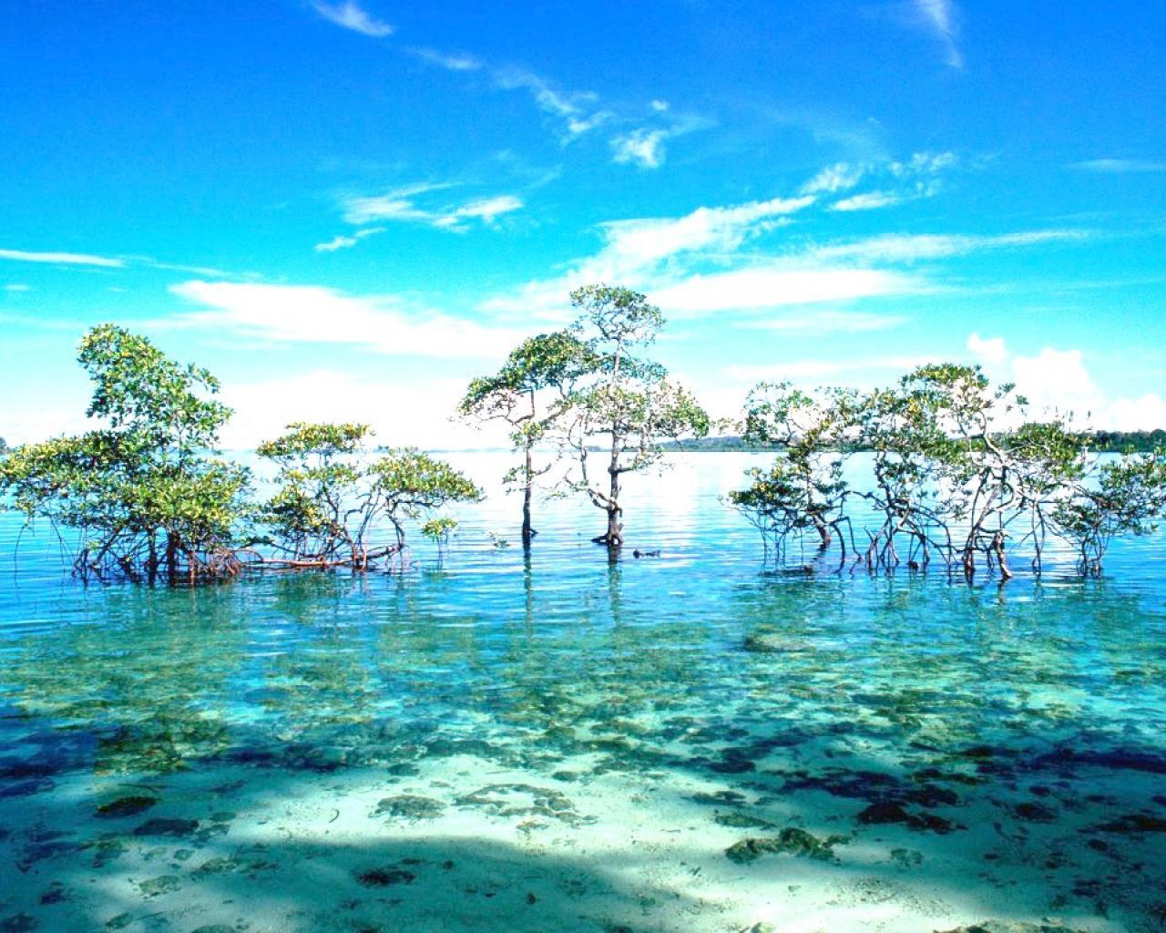 Sensational Andaman