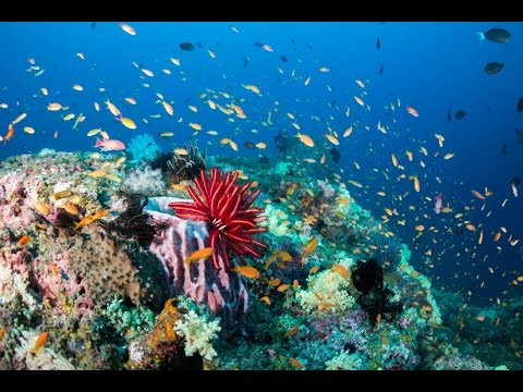 Underwater World Of Andaman