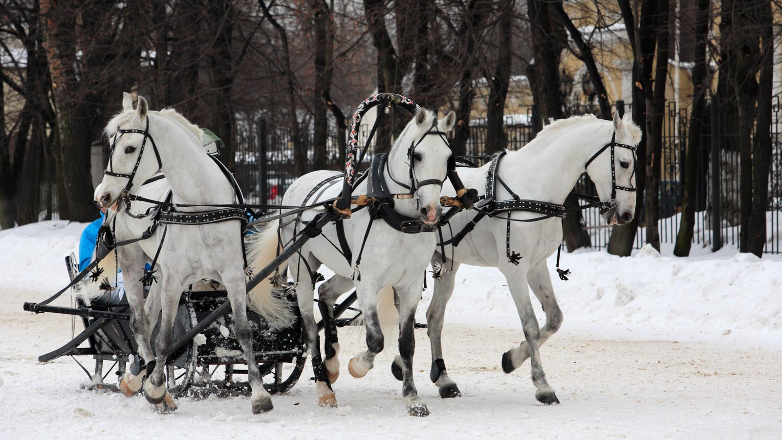 Moscow Beauties