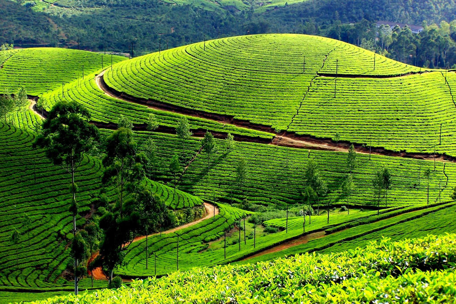 Kerala Package with Kanyakumari Eight Days