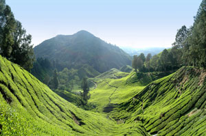 PLEASANT COORG AND MUNNAR