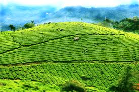 DIFFERENT FACETS OF MUNNAR AND THEKKADY