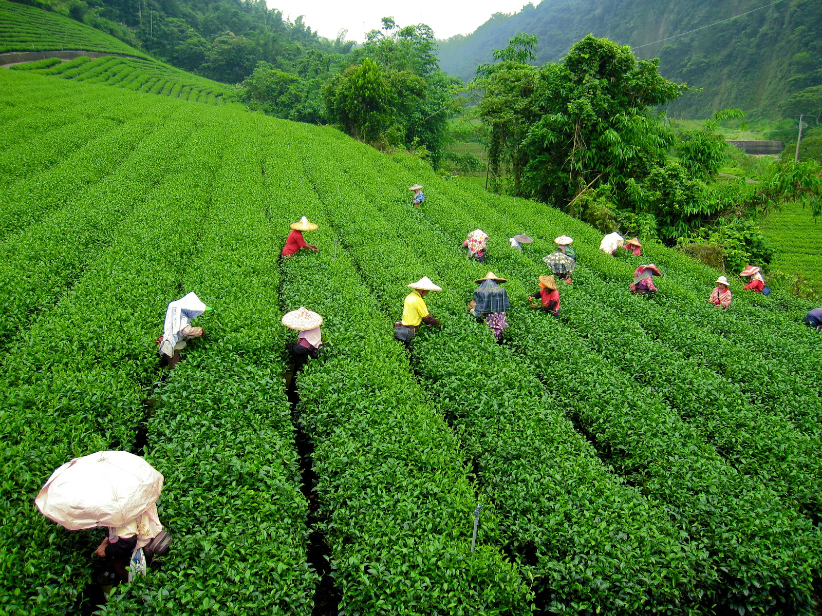 Enchanting Assam