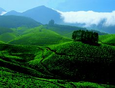 A BLISSFUL TOUR IN MUNNAR