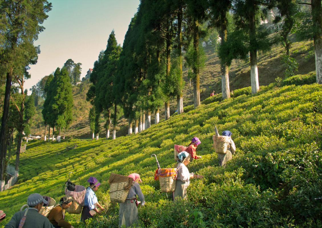 Joyful Darjeeling and Gangtok Package