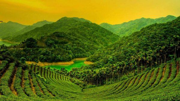 Delightful Kerala