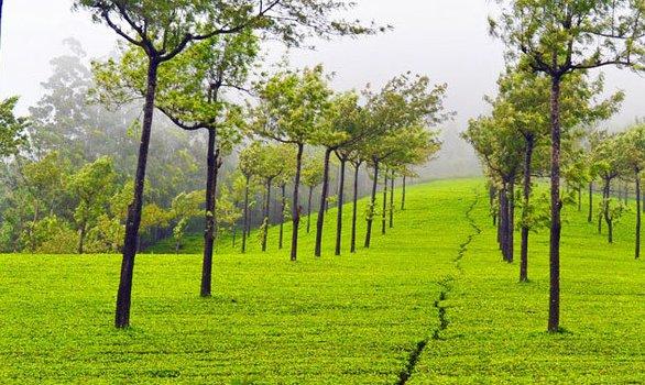 Alluring Assam