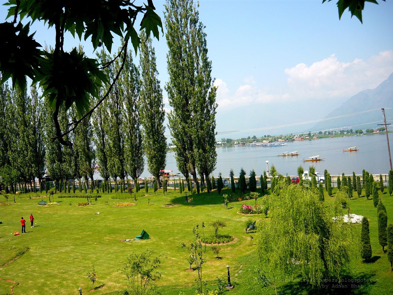 Joyful Kashmir