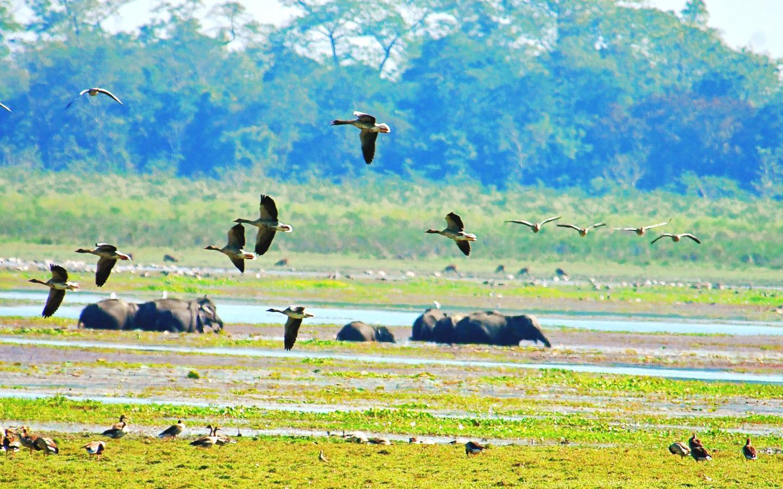 Assam Wildlife Tour