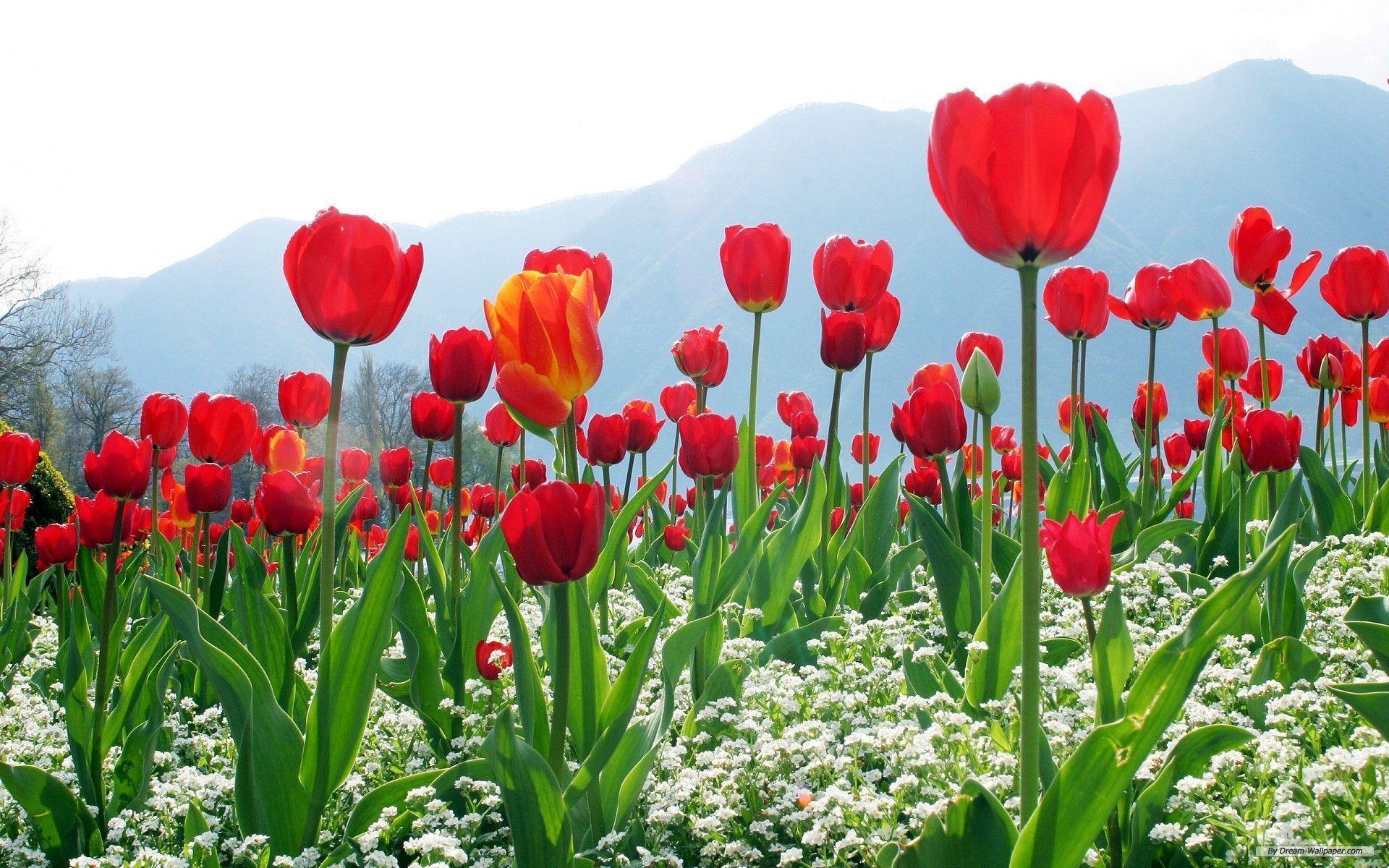 Beautiful Kashmir