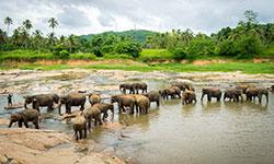 Sri Lanka - Fly and Stay