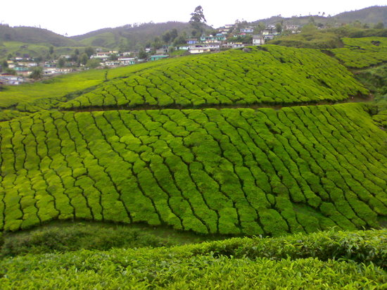 PICTURESQUE MUNNAR AND OOTY