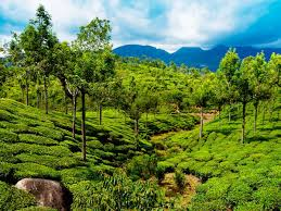 Kerala Munnar Thekady Alleppey Kanyakumari A