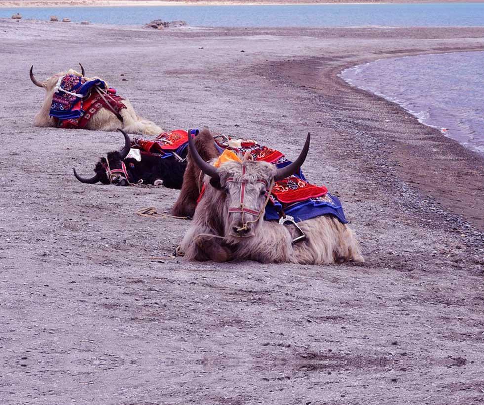 Luxurious Ladakh Tour Package