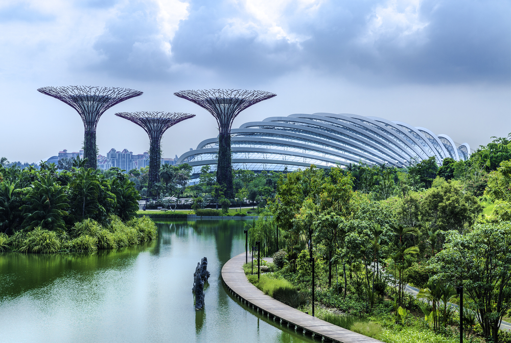Regular Singapore