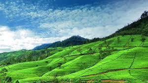 Ceylon Tour Sri Lanka